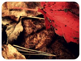 Red leaf by WillowxHeart