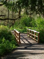 Forest Landscape with Bridge by botanystock