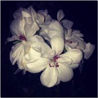 Nights in white satin... by ansdesign