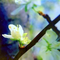 dance of the fairy by CocoaDesert