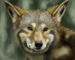 Red Wolf by xTechnologiic