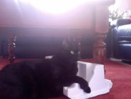 Cat with polystyrene by LJ6204