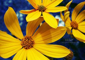 Yellow .:Updated:. by soPWNEDXcore