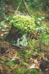 Forest green by Anlin