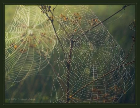 morning web by thement