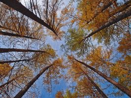 Trees by paolospina
