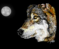 Wolf Moon by Callypso666