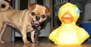 Molly and Duckie by FriendlyButterfly