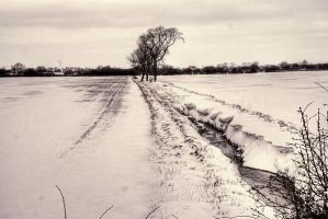 The Ditch... by TheBaldingOne