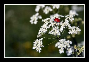 Red Spot On A Flower by h4m4m4t