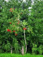 Nice tree and red flowers by enxo7