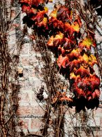 fire vines by wroquephotography