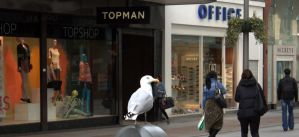 Seagull in Henry Street by EidanNoon