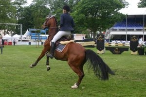 Show Jumping Stock 037 by LuDa-Stock