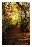 October Road by KJH-Photography