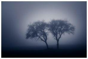 Twosome in mist by joesr