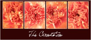 The Carnation by zhoumlh