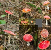[stock HD] Fly agaric, .raw pictures by Itsmil