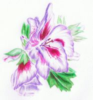 Fancy Geranium 2 by erin-c-1978