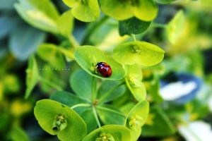 lady bug by AMONstudios