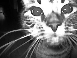 Kitty in black and white by ShelterLight
