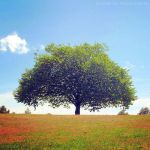The Lone Tree by FlabnBone