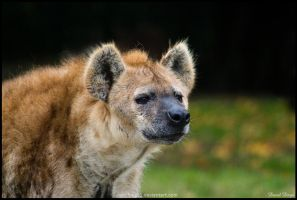 The hyena by Wolfling01