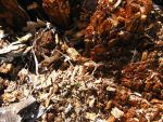 Mulch by Stockry