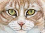 ACEO Light Tabby Cat by sschukina
