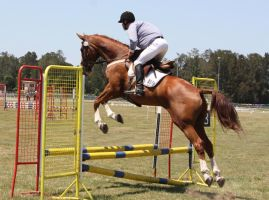 STOCK Showjumping 405 by aussiegal7