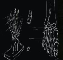 Hand Feet Study by dhagos
