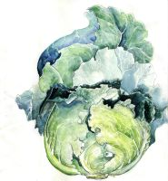 Cabbage Study VII by amwah