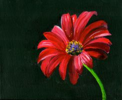 African Daisy by Skyfurrow