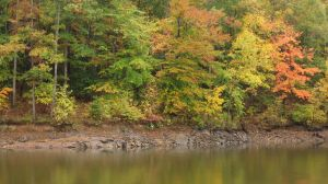 Creekside in Autumn by Yumi07