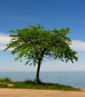 Tree at the Lake by wonenownlee