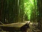 Bamboo Forest 3 by Frollicker