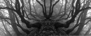 Darkwood Forest - Redux by Graylan