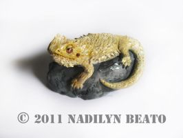 Bearded Dragon on rock by NadilynBeato