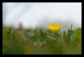Yellow Flower by Cavin