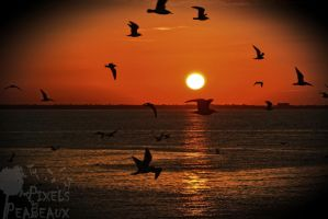 Bird Circle by Peabeaux