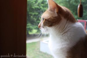 34 - Pippin in the window by gerrish
