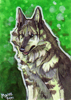 ACEO - Dragonhearluver by Marzzunny