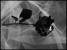 .Black Rose and Ring. by AutumnNightBat