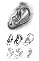 Ear Study by Pentoculus