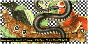 Animals and Plants_PNG by chun0901