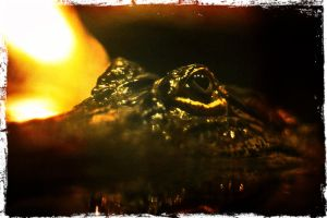 Gator Close Up by alektheplatypus