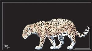 Jaguar by imcy