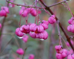 Wet berries by petmag