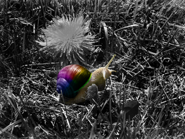 Splash of colors Snail by laimonas171