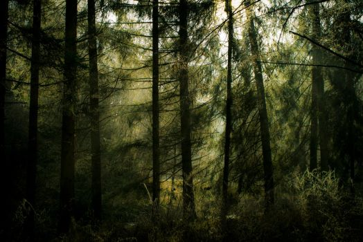 Forest77 by moonchild-unveiled